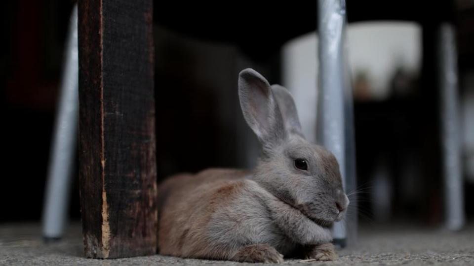 Polish government asks citizens to multiply like rabbits